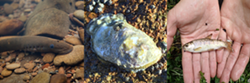 Uploaded by MB Estuary Program