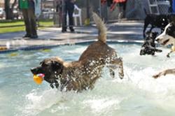 Dogs swim at Templeton Community Pool at annual Dog Splash Days event - Uploaded by Dog Splash Days VDP
