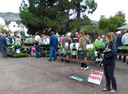 Native Plant Sale - Uploaded by Judi Young