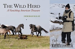The Wild Herd by Deborah Kalas - Uploaded by Kathy Mullins