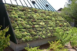 Build the Green Future with a green roof. - Uploaded by Margo Camilleri
