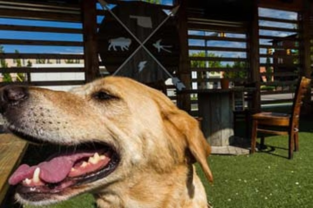 Shogun the dog at Bleau Garden soaking up some sun in Oklahoma City. Best place to take your dog 2015. Wednesday, August 5,  2015. (Keaton Draper)