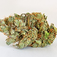 Flower review: Chupacabra