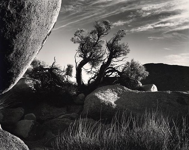 Photograph by Brett Weston - OKLAHOMA CITY MUSEUM OF ART / PROVIDED