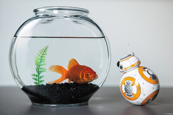 Sphero's BB-8 toy (Sphero / Provided)