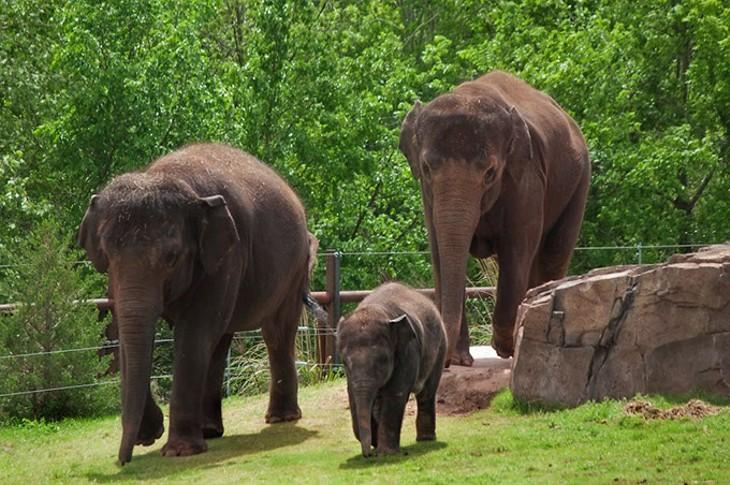 Chandra, Malee and Asha go for a stroll (Gillian Lang)