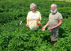 Barbara and Robert Stelle with their dog Dolly in their lush pepper field at Sunrise Acres. (Shannon Cornman)