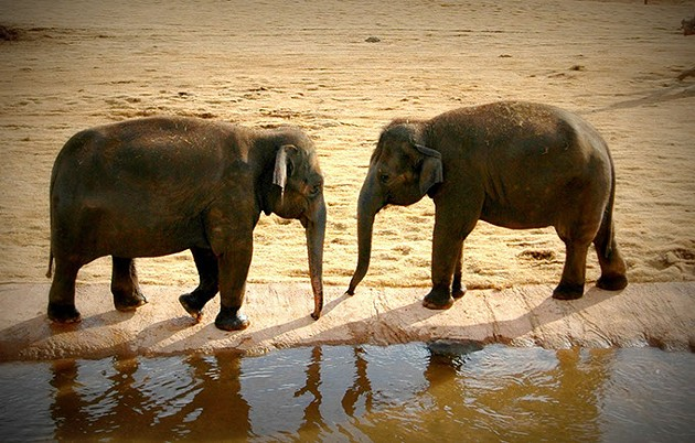 Expectant mother Asha and her sister Chandra at the watering hole. (Lisa Lee)