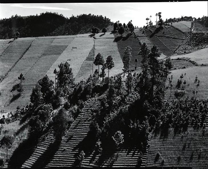 Photograph by Brett Weston - OKLAHOMA CITY MUSEUM OF ART / PROVIDED