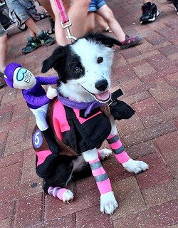 A dog costume contest is among many ways to celebrate National Dog Day at Remington Bark.(Remington Park Racing & Casino / Provided)
