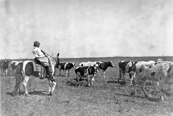 "Lawton, Oklahoma - Lewis W. Hine - April, 1917 - Notebook Entry: Sarah Crutcher, 12-year-old girl herding cattle. Route 4, c/o S.O. Crutcher. She was out of school (#49 Comanche County) only 2 weeks this year and that was to herd 100 head of cattle for her father, a prosperous farmer. She said: ""I didn't like it either."" She is doing well in school. Is in Grade 8. - Library of Congress Prints and Photographs Division, Washington D.C. - LIBRARY OF CONGRESS"