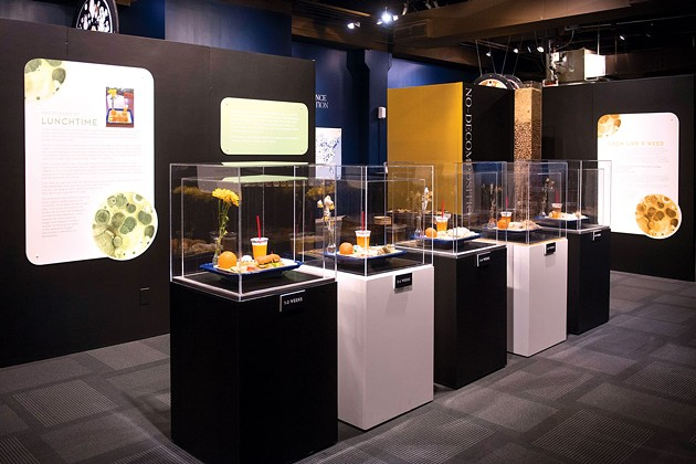 A display in the smART Space exhibition Decomposition shows guests how real food decomposes over time. | Photo Science Museum Oklahoma / provided