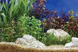 Medicine Park Aquarium & Natural Sciences Center opened in June 2017. - PROVIDED