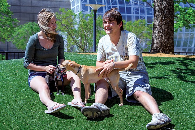 Myriad Botanical Gardens Dog Park is an off-leash dog park in downtown OKC. - CARL SHORTT JR. / MYRIAD BOTANICAL GARDENS / PROVIDED