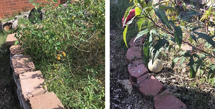 Fresh vegetables and fruit grow in the school's garden. - NAZARENE HARRIS