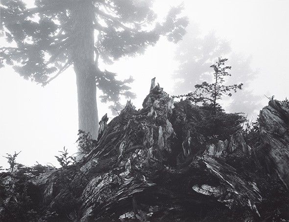Tree, Stump and Mist, Northern Cascades, Washington, 1958 - ANSEL ADAMS COLLECTION CENTER FOR CREATIVE PHOTOGRAPHY ©THE ANSEL ADAMS PUBLISHING RIGHTS TRUST / PROVIDED