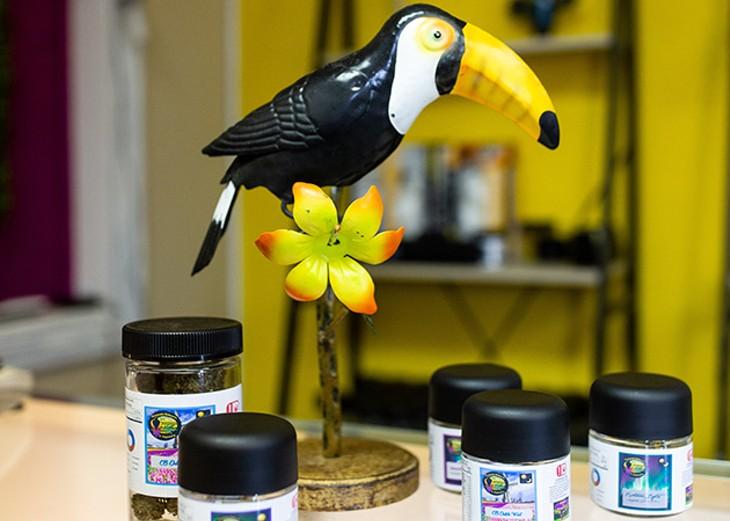 Toucannabis is a tropical bird-themed dispensary in northeast Oklahoma City. - ALEXA ACE