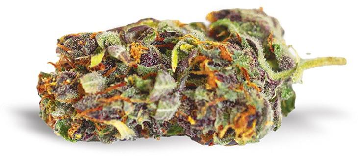 Purple Tangie - ALEXA ACE