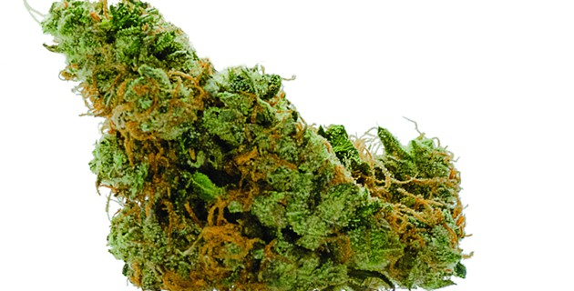 Strain Review: GMO Cookies