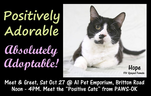 "Hope is one of the 6 ""positively adoptable"" cats who will be meeting potential new families at this event."