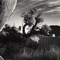 Photograph by Brett Weston          OKLAHOMA CITY MUSEUM OF ART / PROVIDED