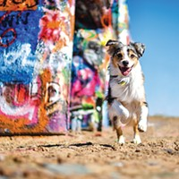 Pet Gazette: Dietary solutions for pets