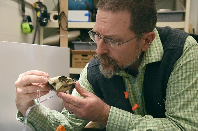Tom Luczycki, exhibit director at the Sam Noble Museum in Norman, examines the reproduction of the Aquilops Americanus scull before it goes on display to the public.  mh