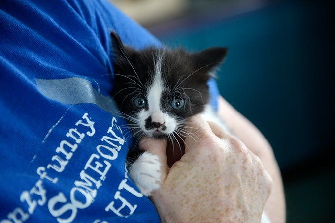 Kitten at Pet Angels Rescue in Guthrie, Wednesday, April 19, 2017. - GARETT FISBECK