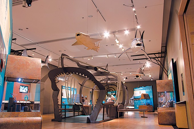 Sam Noble Museum visitors can step inside the a reconstructed frame of what the largest estimated megalodon shark would have been. - SAM NOBLE MUSEUM / PROVIDED