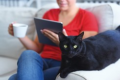 Pet Gazette:  Your cat's scratch has met its match