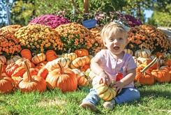 Fall Guide: Great pumpkins