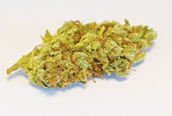 Flower Review: Norma's Dream