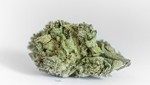 Flower review: Silverback Gorilla