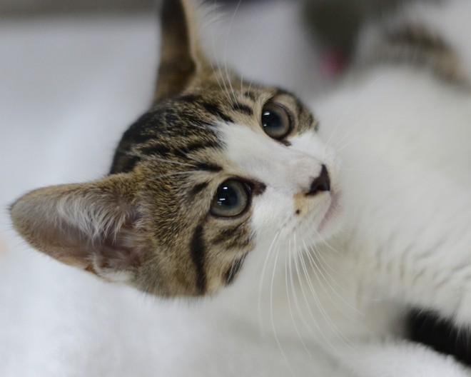 10 cuddly cats who'll love you forever if you adopt them from Orange County Animal Services