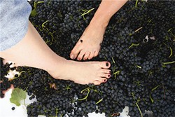 20th Annual Harvest Grape Stomp