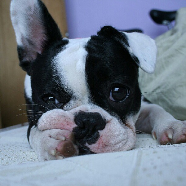 #owpuppylove Cutest Pets Contest Entries