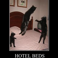 Cats 1, Loews Hotel 0