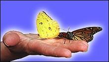sgbutterfliesjpg