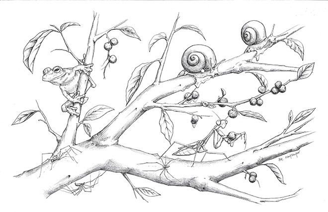 'Berries' - THE NAYSAYER