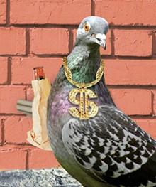 pigeoncoverjpg