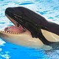'Blackfish' gives SeaWorld a black eye