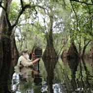 Clyde Butcher's photographs exalt the Florida Everglades; Michael Covello's installation deranges the senses
