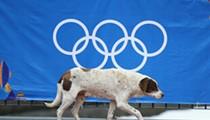 Sochi stray dogs coming to Daytona Beach for adoption