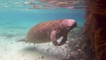Do, me Orlando: Swimming with manatees at Plantation on Crystal River, Florida