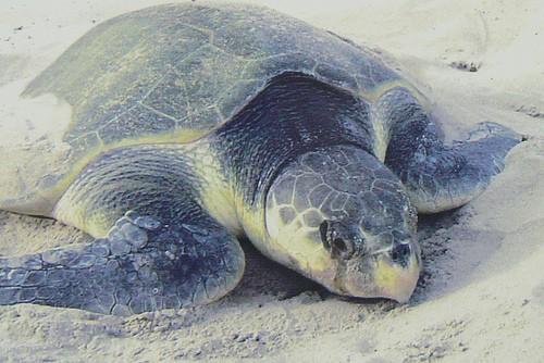 turtlejpg