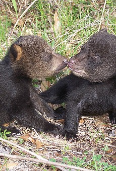 Florida Fish and Wildlife Conservation Commission to discuss opening recreational bear-hunting season