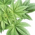 Florida medical-marijuana FAQ