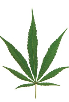 Florida Republicans mad about reefer