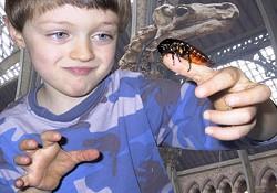 pet-cockroachjpg
