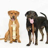 Gimme Shelter: Adopt Hunter and Soccer from Orange County Animal Services